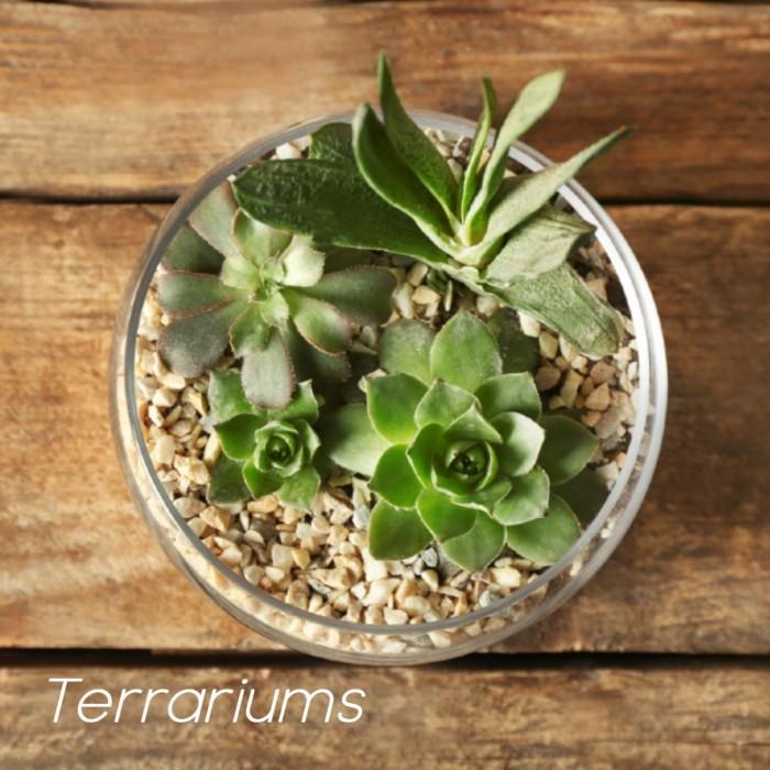 Succulente FPS125-02