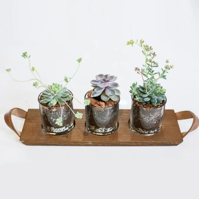 Succulente FPS125-01