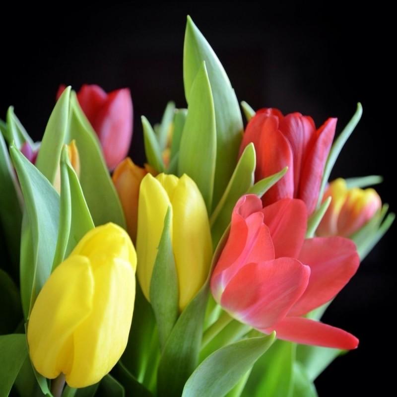 Bouquet  Des  10 Tulipes